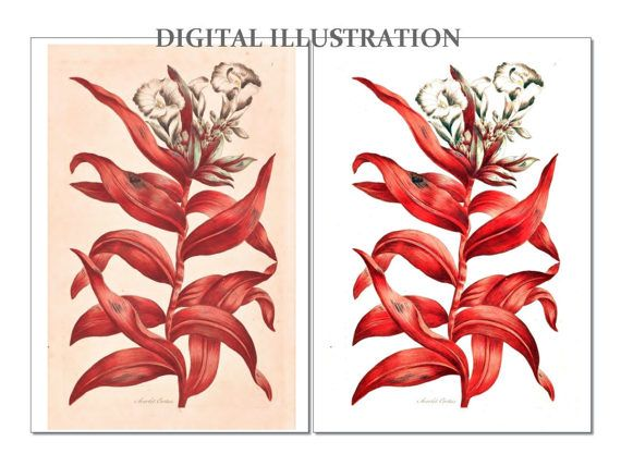 Flower Clipart Antique Image  Botanical Plate Digital by BiSew