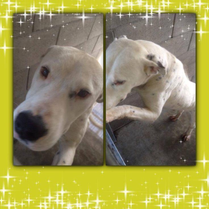 Needs adoption from Tamworth NSW Australia