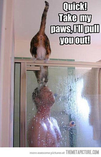 ahahaha cats. gotta love them.