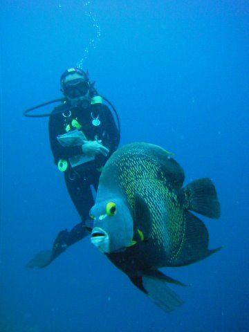 bonaire  Antillas holandesas: Bonair Antilla, Bonaire Diving, América Central, Scubas Diving, Bonair Netherlands, Dit Eiland, Beautiful Creatures, 18 Whales Sharks, Antilla Holandesa