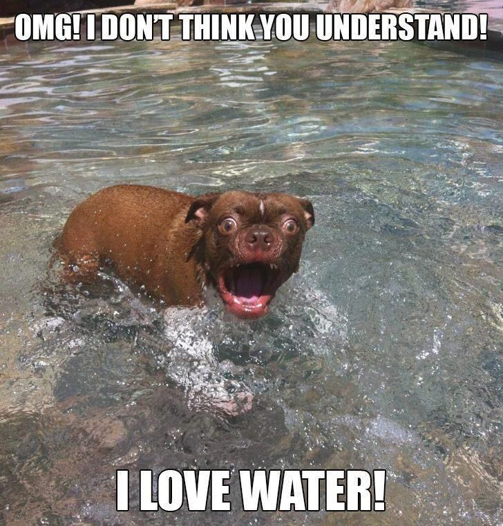 x: Dogs Quotes, Funny Pics, Silly Dogs, Funny Pictures, Funny Stuff, Humor Quotes, Funny Dogs Pictures, Funny Animal, Dogs Faces