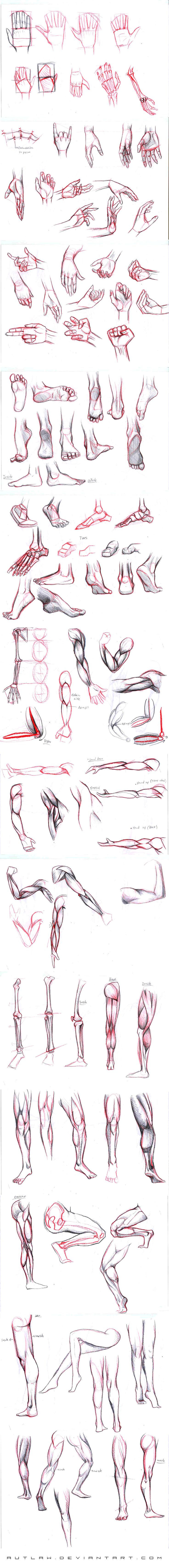 Studies part 2 by Autlaw.deviantart.com on @deviantART