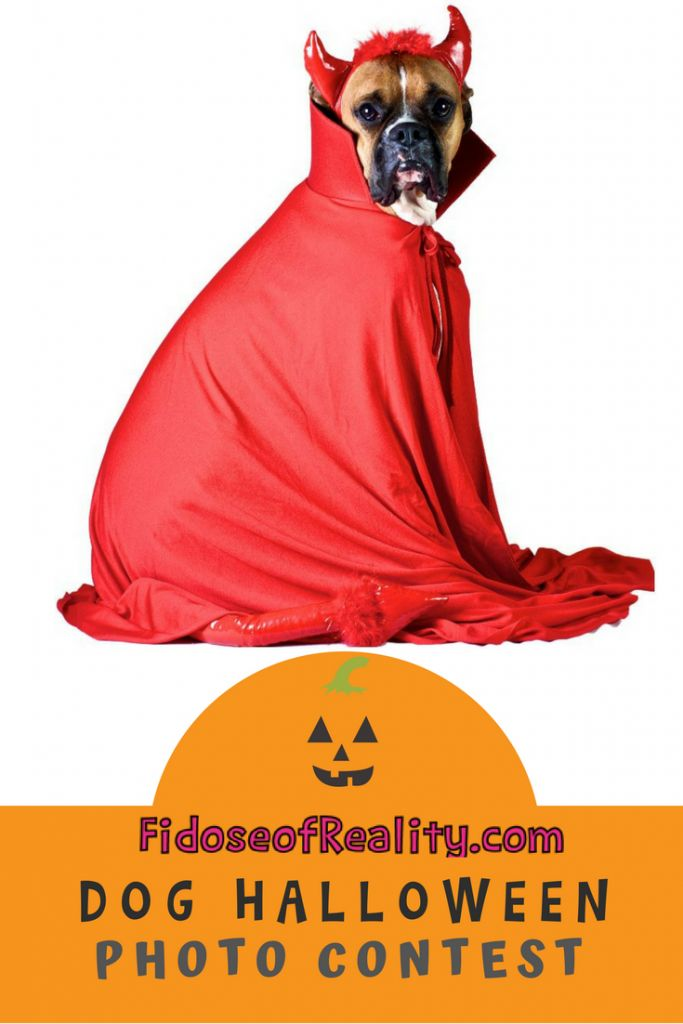 Dog Halloween Photo Contest 2016 Edition Halloween Photos Dog