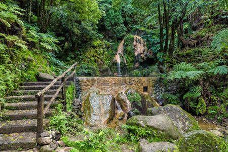 Hot Spring piscina en el bosque tropical Caldeira Velha Azores Foto de archivo
