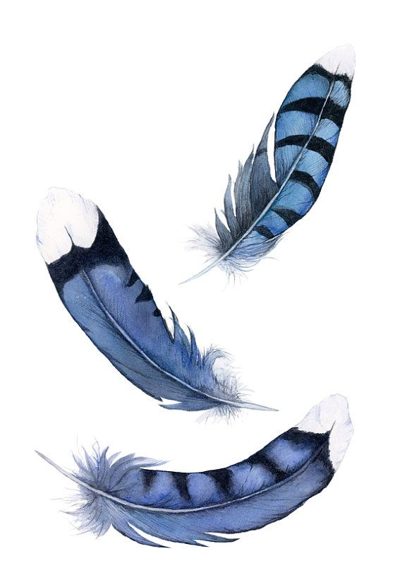 Fallen Feather Blue Feather Blue Jay Feather by SuisaiGenki, $20.00