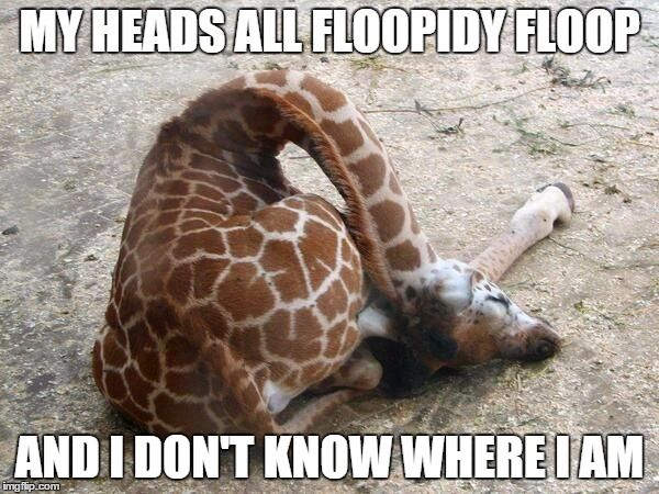 """Go home, your drunk giraffe"""