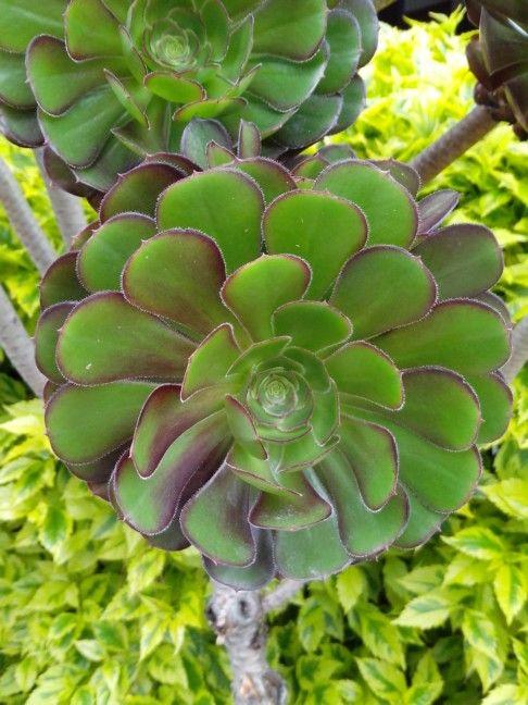 Crasas flowers Bogota