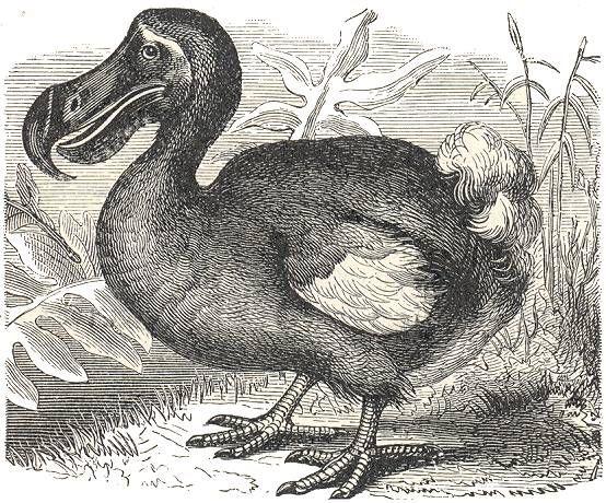 dodo bird gone but not forgotten