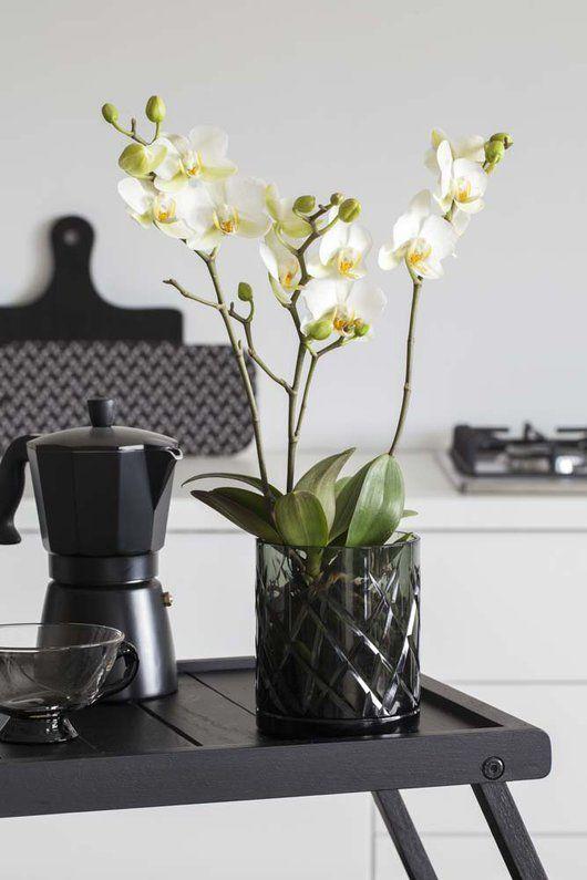 Hvit orkide i sotet glasspotte med riller.