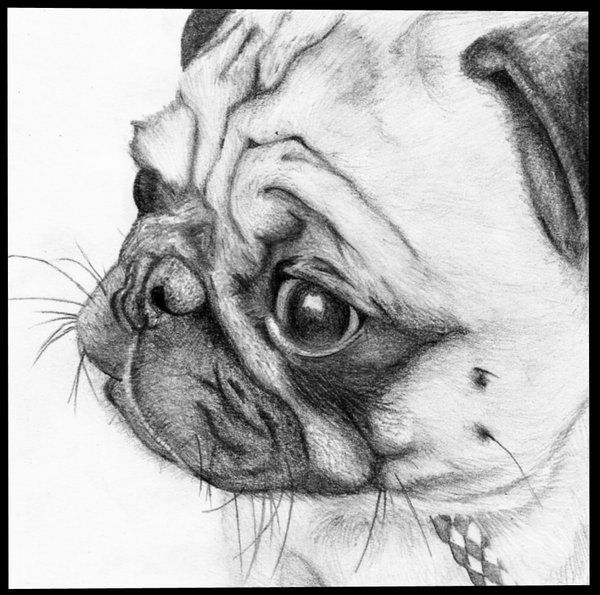 pug art   PUG by ~iPhee on deviantART