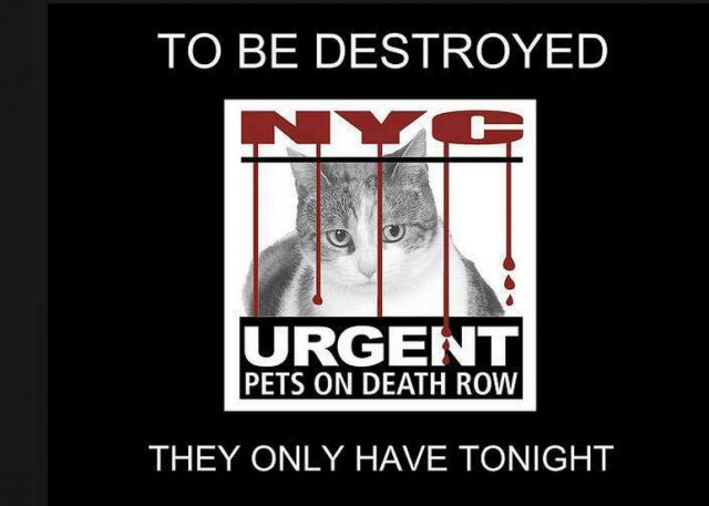 "Tonight's At-Risk List has been posted by the NYCACC and 5 cats/kittens are in great danger. Please share - - Info    Tonight's list is posted.  You can view the list here: http://nyccats.urgentpodr.org/tbd-cats-page/  The shelter closes at 8pm. Go to the ACC website( http://www.nycacc.org/PublicAtRisk.htm) ASAP to adopt a PUBLIC LIST cat (noted with a ""P"" on their profile) and/or work with a rescue...-  Click for info & Current Status: http://nyccats.urgent"