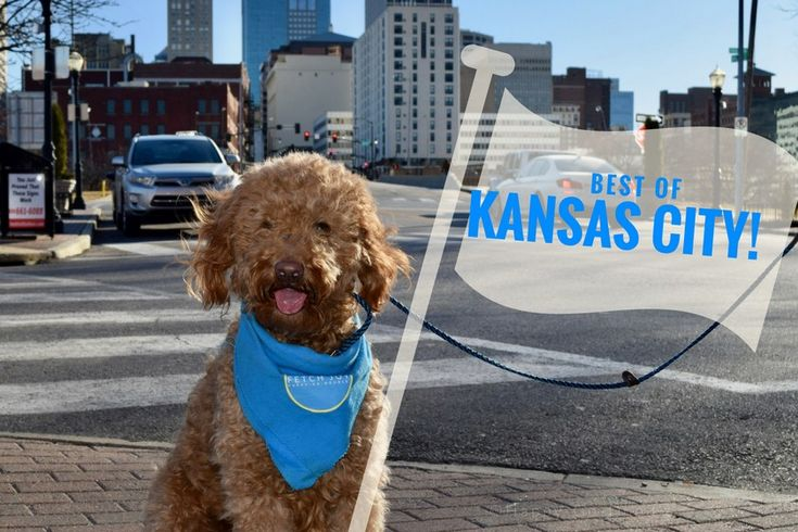 Dog Friendly Places In Kansas City