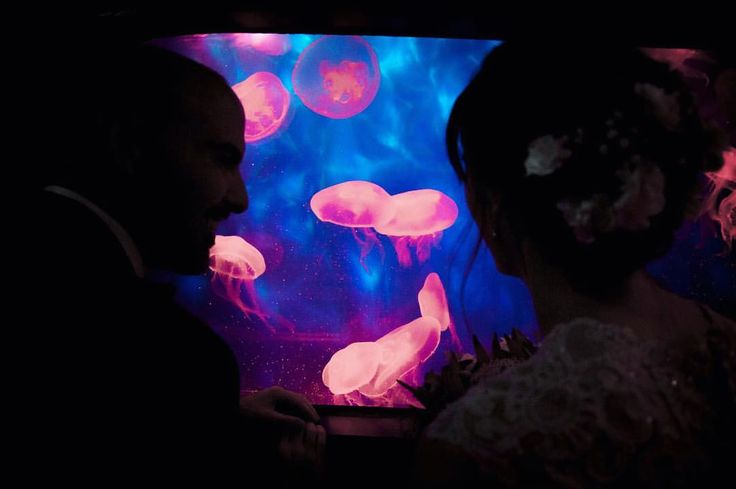"""Samantha Moody Photography 📷 on Instagram: """"The jellyfish are ready for their close up 🦑 #melbourneaquarium #melbournesealife #samanthamoodyphotography #aquariumwedding #wedding #jellyfish #love #water"""