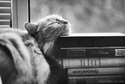 cat Black and White photo book livro preto e branco gato livros