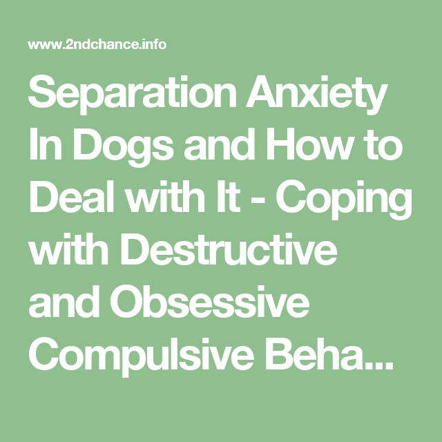 Separation Anxiety In Dogs and How to Deal with It - Coping with Destructive and Obsessive Compulsive Behaviors