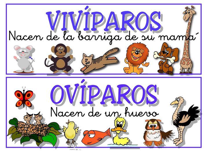 imagenes para colorear para niños pequeños sobre viviparos ...