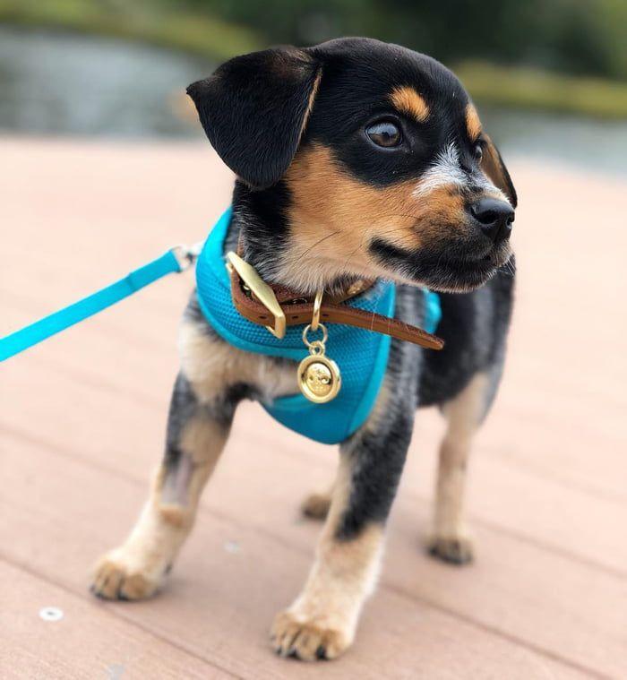 Dock Dog In Training Training Your Dog Dog Training