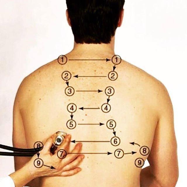 Focos de auscultación pulmonar. Repaso / Semiología.  #medicine #estudiantemedico #anatomiahumana