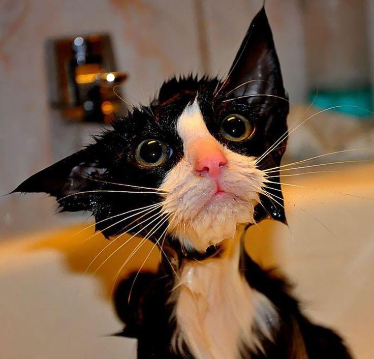 22 plaatjes van extreem grappige natte katten
