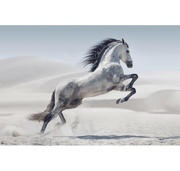Pferde Poster Andalusier. Hier bei www.closeup.de