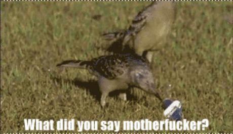 When animals talk back.