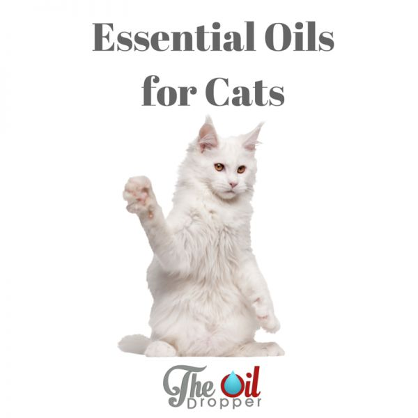 can you use essential oils with cats trees cats and the o 39 jays. Black Bedroom Furniture Sets. Home Design Ideas