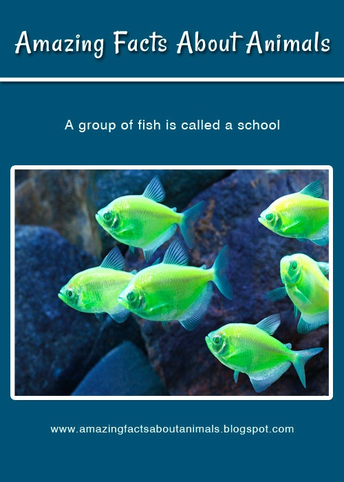 32 best amazing facts about animals images on pinterest for Freshwater fish facts