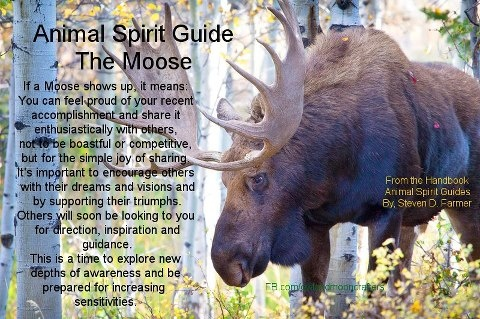 Animal Spirit Guide : The Moose