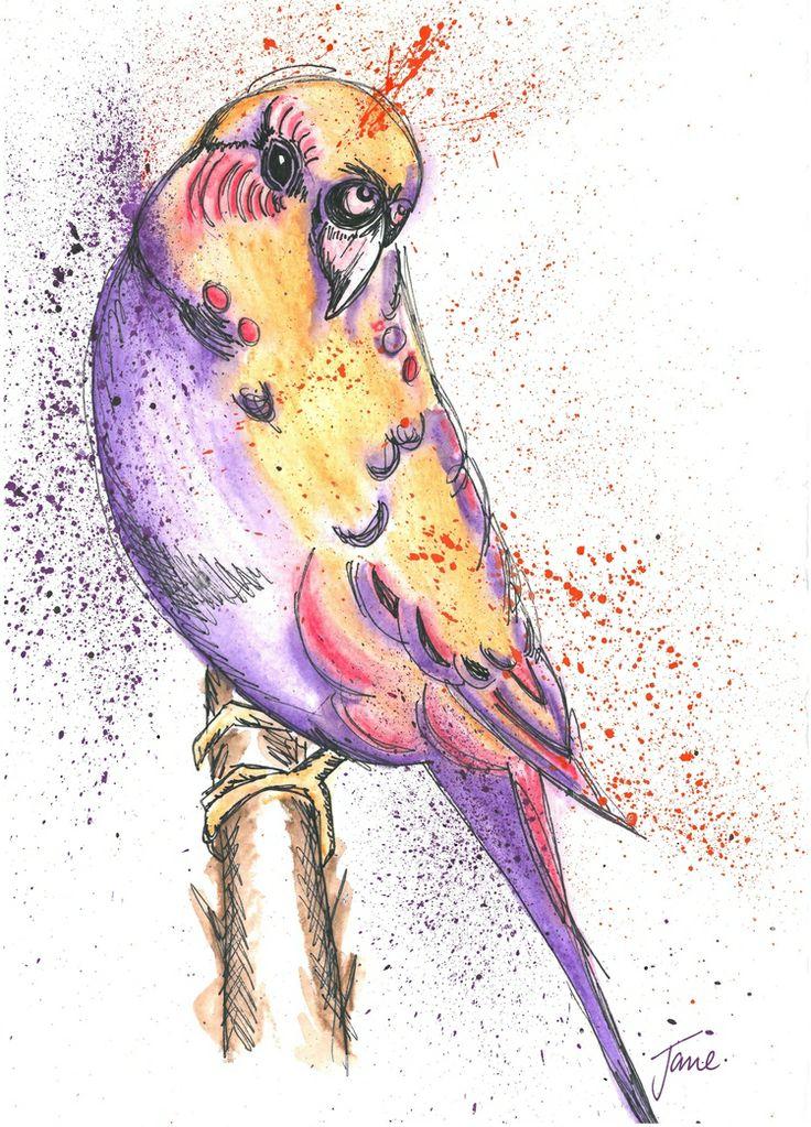 Budgie, Water colour Pencils, A4