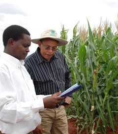 Monsanto and Gates Foundation Push GE Crops on Africa