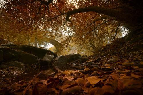 Photographer Antonio Bernardino - Autumn scene #1981123. 35PHOTO