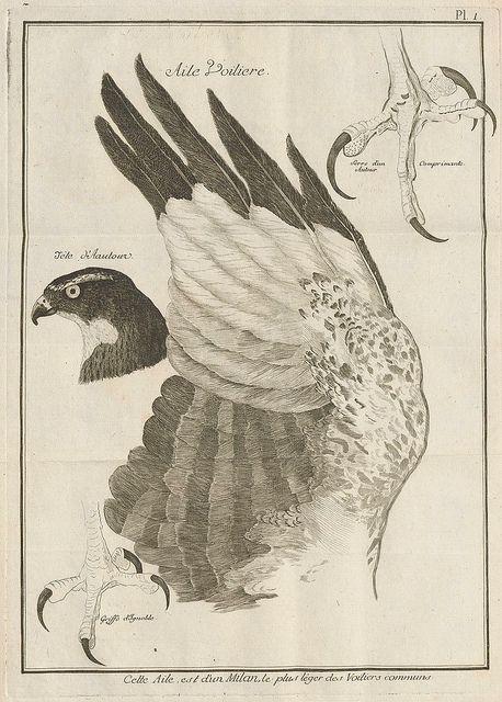 Observations sur le vol des oiseaux de proie by Jean Huber 1784 | Flickr: partage de photos!