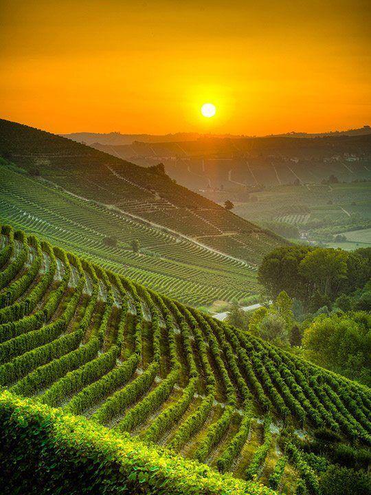Italy Vineyards at Sunrise