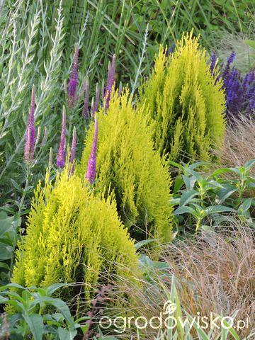 Zielonej ogrodniczki marzenie o zielonym ogrodzie - strona 736 - Forum ogrodnicze - Ogrodowisko