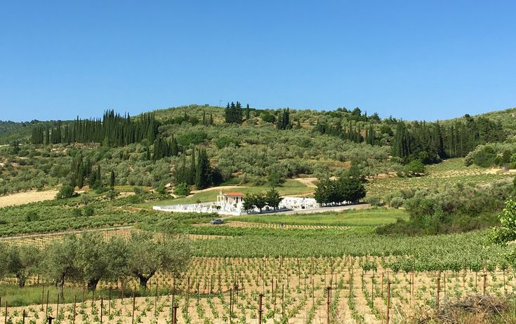 Greek winery tours and tasting in Nemea with Greece2Taste
