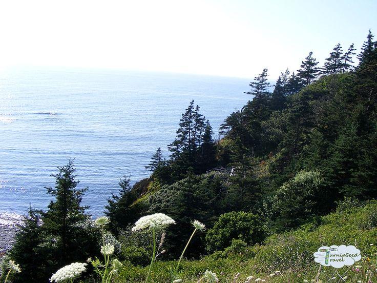 Best Places Spot Whales Cape Breton Island