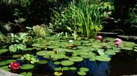 Natural Way to Kill Mosquito Larvae in Ponds | eHow