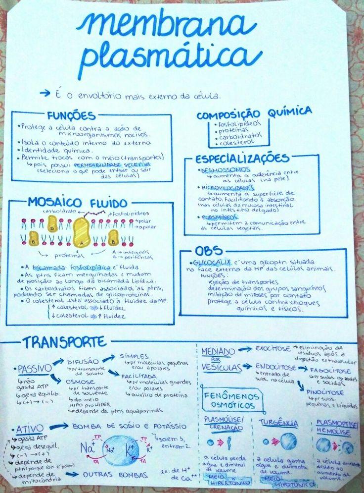 Resumo de Membrana Plasmática + Transportes através das MP / Estudos - Biologia