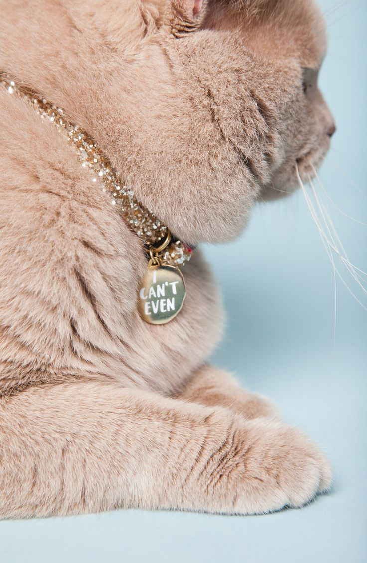 'I can't even' sassy pet collar tags by helloharriet.com                                                                                                                                                                                 More