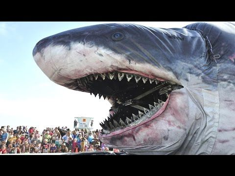 Real Megalodon Found - World's Biggest Shark Ever Found - YouTube