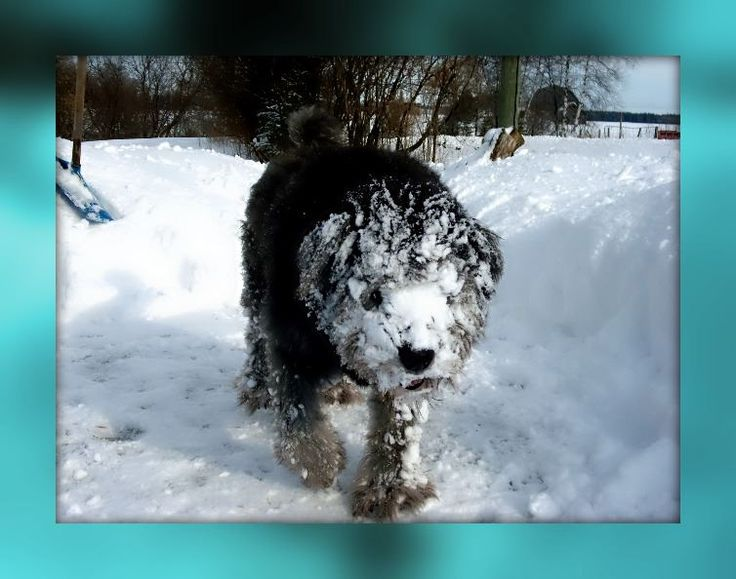 when there was snow .. you could be sure to see Snoop this way bahahahaha