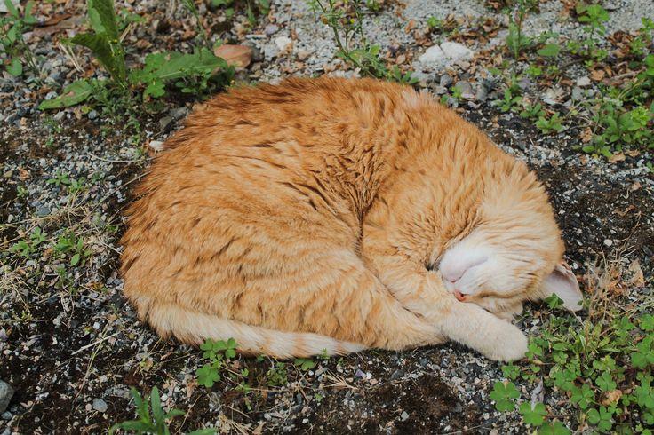 https://flic.kr/p/sxGjTr | Sleeping cat | Le chat de mes amis dans un de ses exercices favoris