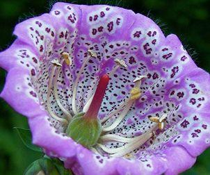 fiori tropicali - Cerca con Google
