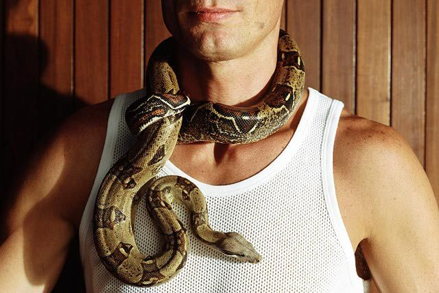 How Do You Adopt and Care for a Boa Constrictor?