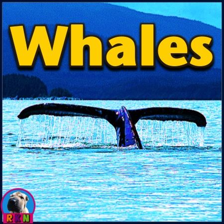 Whales PowerPoint and Activities:  Learn all about whales in this interactive PPT presentation. This nonfiction resource about the marine mammal is full of information, photos, illustrations, riddles, and fun facts. It's designed for teachers, students, and parents! When it's over, challenge the kids with some higher level thinking activities. By Ryan Nygren (photo by Aconcagua - http://commons.wikimedia.org/wiki/File:Whale_tail_near_Juneau,_Alaska.jpg