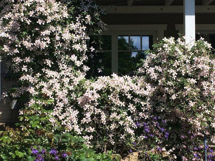 755 best Garten images on Pinterest Balconies, Garden layouts and