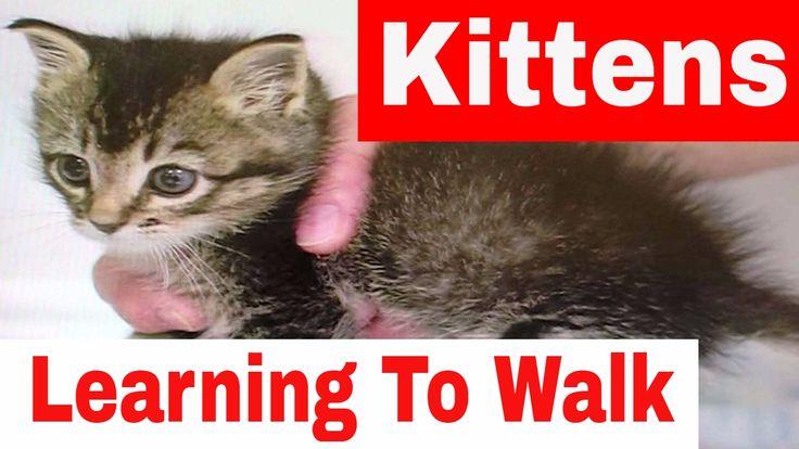 Kittens Learning To Walk - Baby Kitten Trying To Walk - Very Cute Video