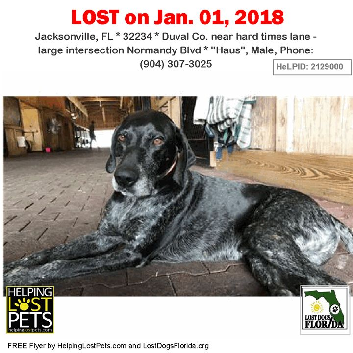 Have you seen this lost dog?  #LOSTDOG #Haus #Jacksonville (hard times lane - large intersection Normandy Blvd)  #FL 32234 #Duval Co.  #Dog 01-01-2018! Male #GermanShorthairedPointer Black / Grey/orange plastic collar that said Lizzie and had phone number.  Dogs name is actually Haus  CONTACT Phone: (904) 307-3025  More Info Photos and to Contact: http://ift.tt/2E8bSsg  To see this pets location on the HelpingLostPets Map: http://ift.tt/2EWAIfV  Let's get Haus home! #lostdogsflorida…