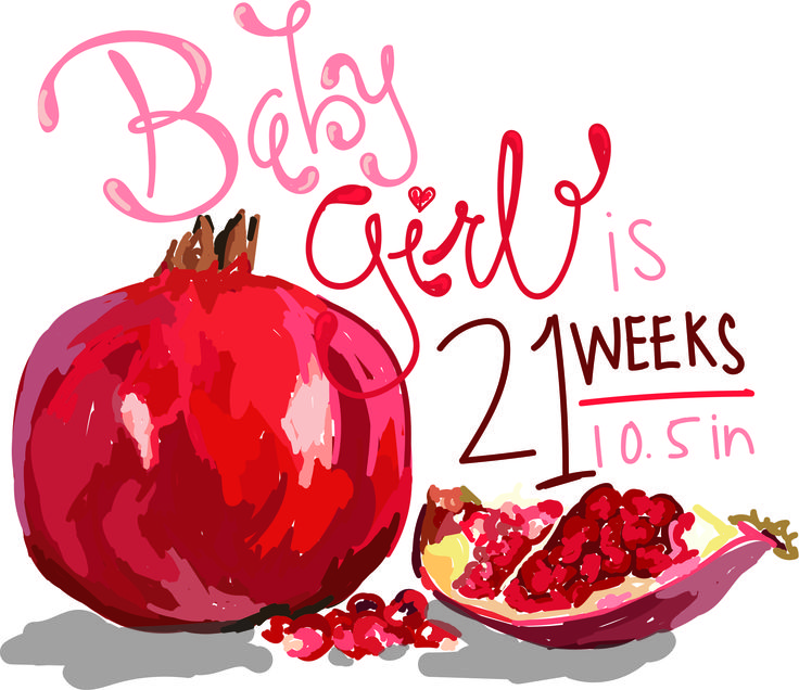 Baby/fruit size comparisons to have throughout you're pregnancy.