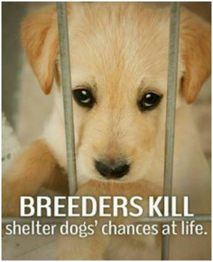 For as long as the shelters are full and homeless animals are being killed, I hate breeders.